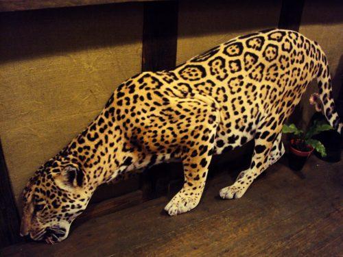 Leopards (DZ04) Leopard (DZ04) for rent Леопард (DZ04)