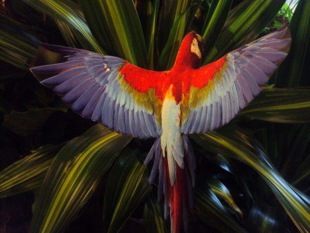 Papagailis (DZ07) Parrot (DZ07) Попугай (DZ07)