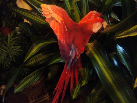 Papagailis (DZ05) Parrot (DZ05) for rent Попугай (DZ05)