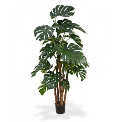 Telpaugs - Monstera Комнатное растение - Монстера Indoor plant - Monstera