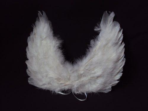 Eņģeļu spārni iznomā