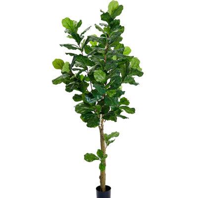 Mākslīgs fikuss 2.1m (MKO7) Искусственный фикус artificial ficus tree