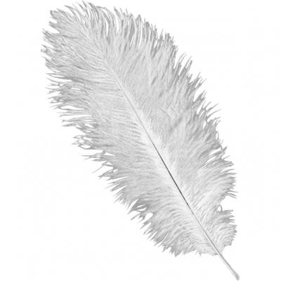 Baltas strausu spalvas strausa spalvu noma īre