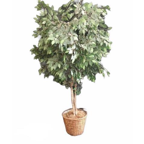 Mākslīgs koks podā Искусственное дерево в горшке Artificial tree in a pot zaļumu noma, koku noma, augu īre