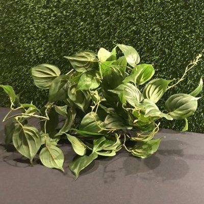 Augs augu noma Растение Plant