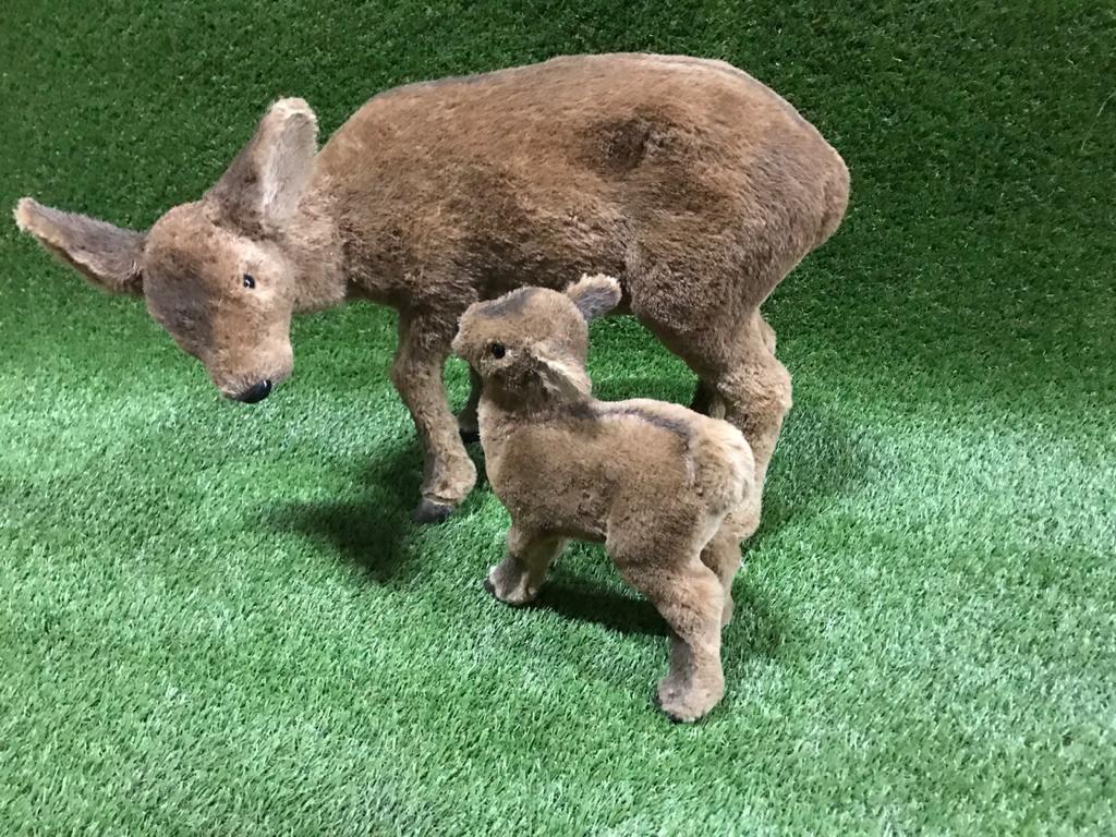 Stirnas Косули Roe deers