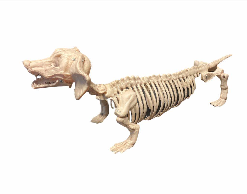 Sunīša skelets