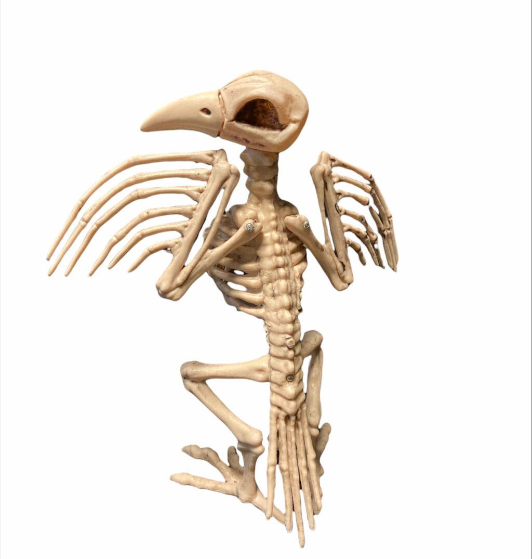 Putna skelets