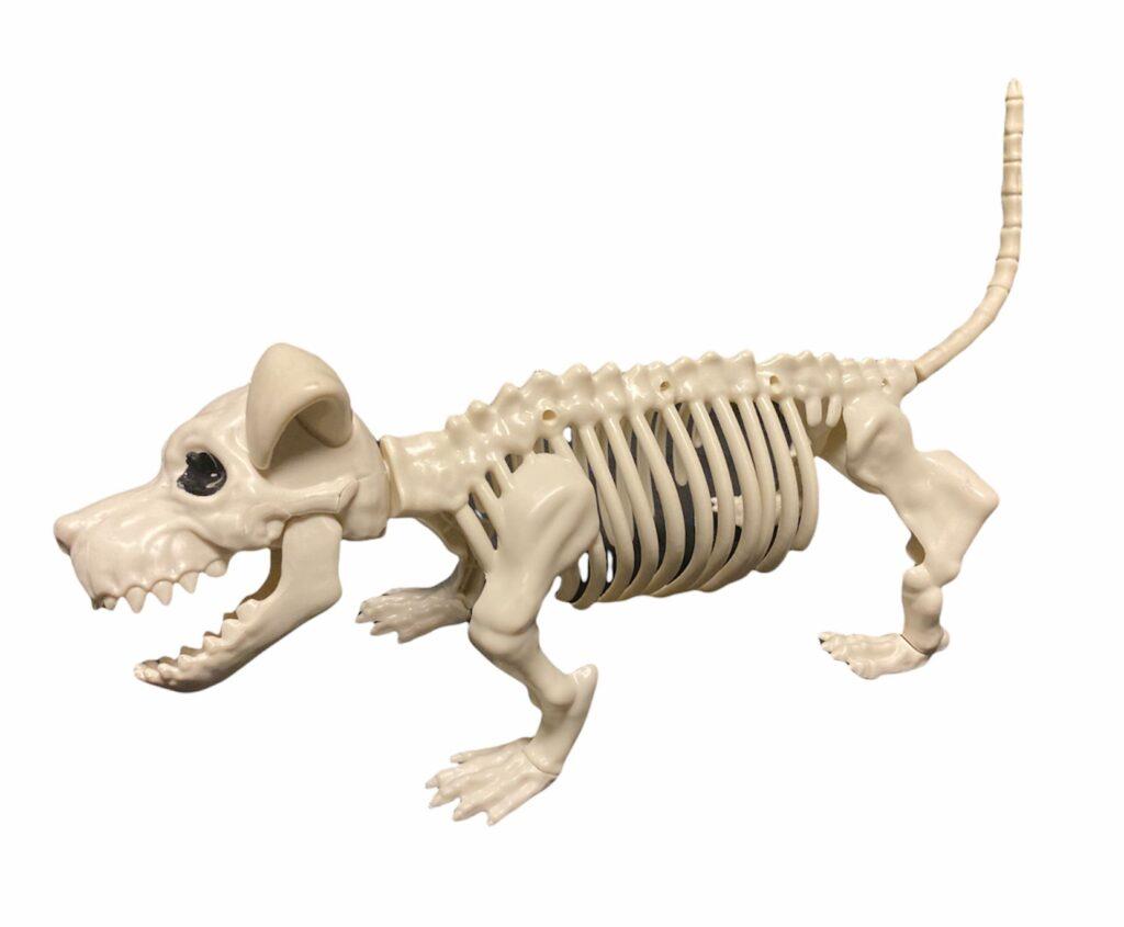 Suņa skelets noma